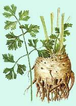 http://plant.astrakhan.ws/img/sel_pah.jpg